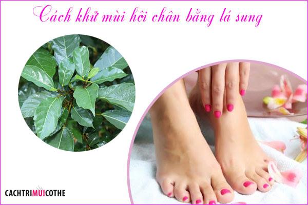 cách khử mùi hôi chân bằng lá sung